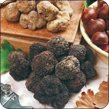 Mostra mercato del Tartufo nero mille piatti gustosi per tutti i palati
